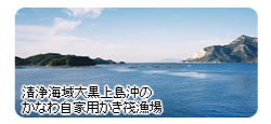 清浄海域大黒上島沖のかなわ自家用かき筏漁場画像